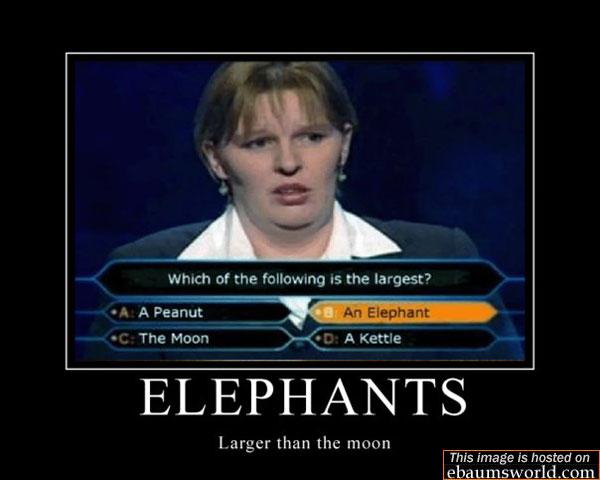Random Talk Thread - Page 4 11659713051_elephants