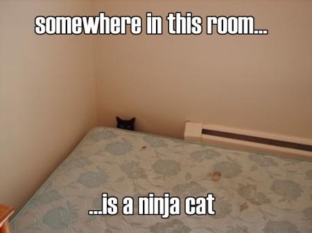 LOL Cats 734369
