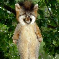 FurryFury-1303555986.jpg