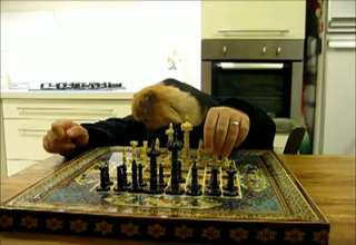 cat playing chess view on ebaumsworld.com tube online.