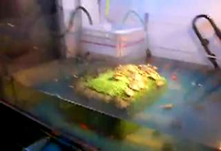 live turtles in machine view on ebaumsworld.com tube online.